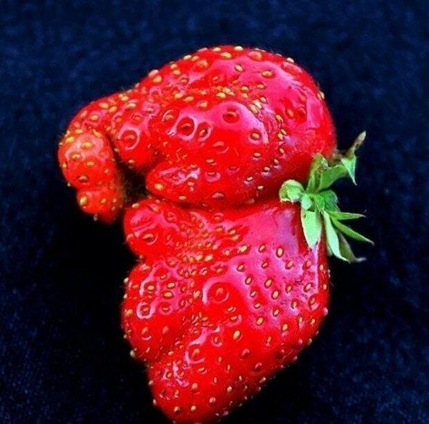 Смешные фотографии «оживших» овощей и фруктов Интересное