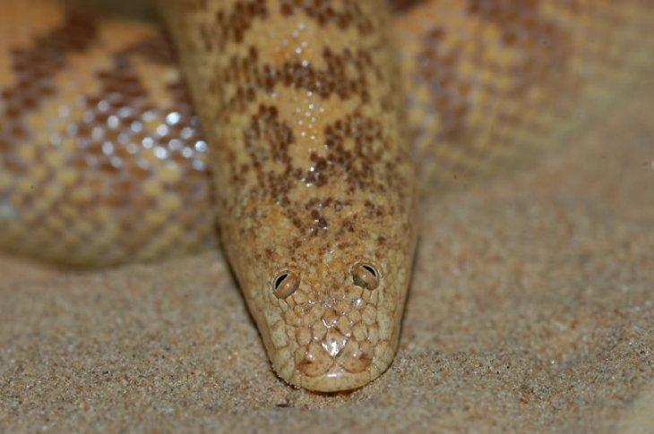 Змея со смешными глазами Интересное