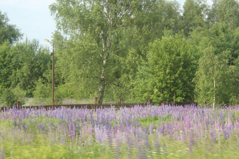 Калининградское железнодорожное путешествия,Путешествие и отдых