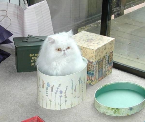 Кошки — это жидкость, есть доказательства Интересное
