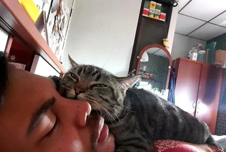 Парень установил в спальне скрытую камеру и узнал, как кот относится к нему по ночам Приколы,коты,фотографии
