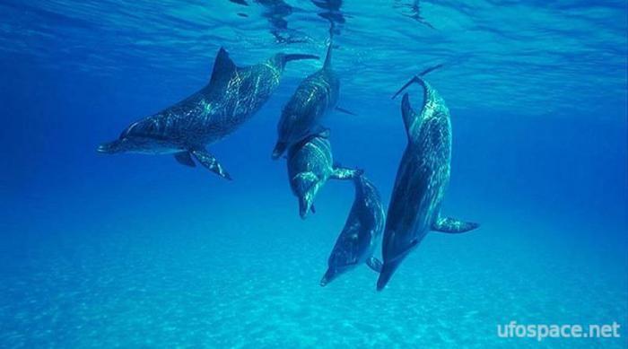Загадочные случаи, когда дельфины спасали людей от акул Интересное