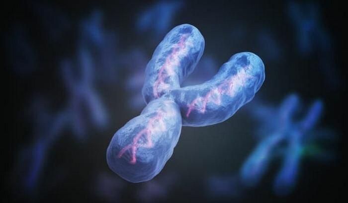 10 открытий, которые были сделаны благодаря анализу древних ДНК Интересное