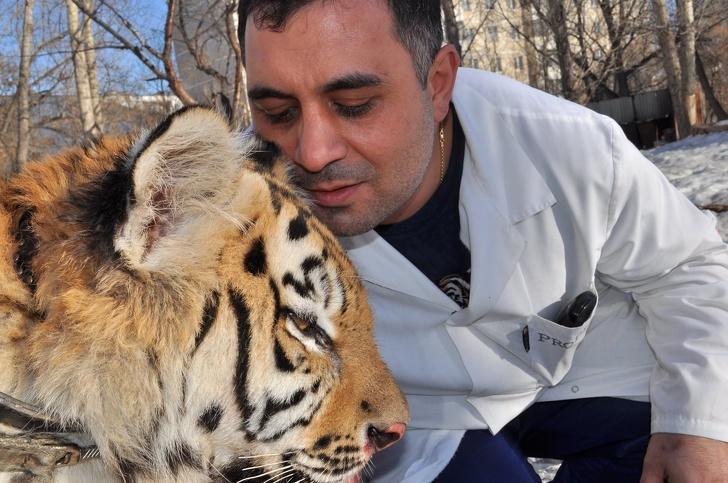 История челябинского ветеринара, который спас покалеченного тигра Интересное