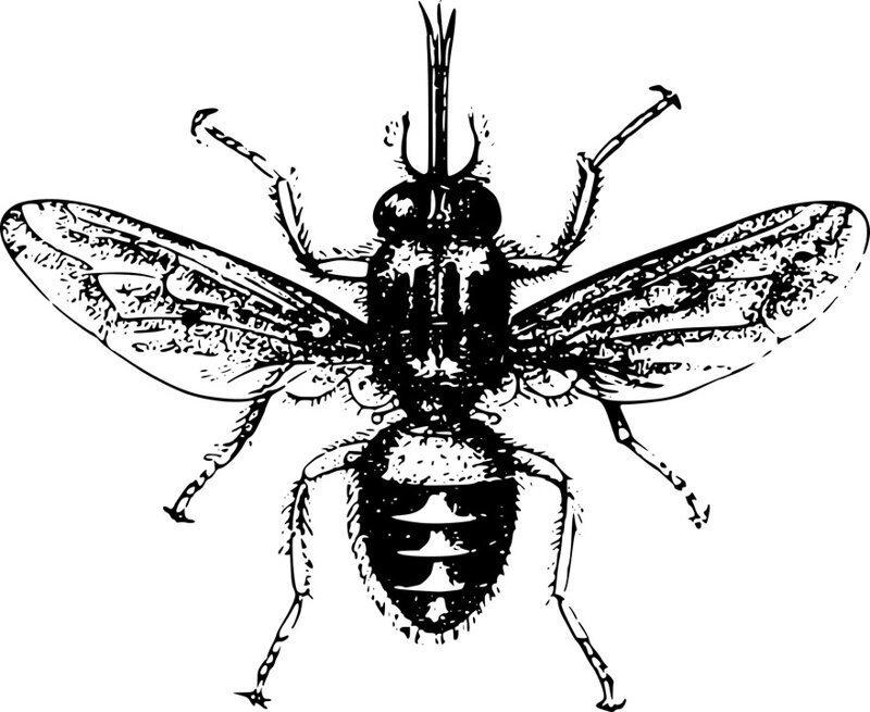 Чем опасна муха цеце? Интересное