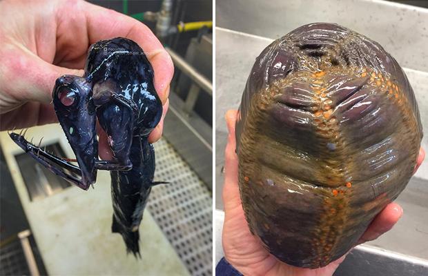 Самые необычные обитатели моря Разное,Человек,обитатели моря