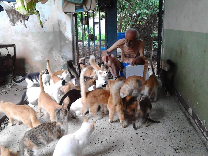Человечность в трудное время: Семья заботится о 50 бездомных кошках кошки и коты,Хуан Рейносо,Венесуэла,приют