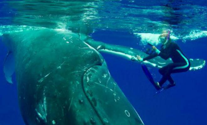 Огромный кит спас дайверу жизнь акула,дайвер,кит,океан,Пространство