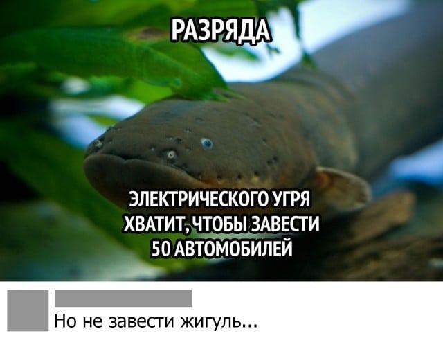 Самые смешные и забавные картинки. часть 559 Приколы,интересно,смешное,фото