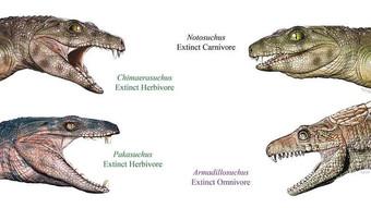 Многие древние крокодилы были вегетарианцами Археология
