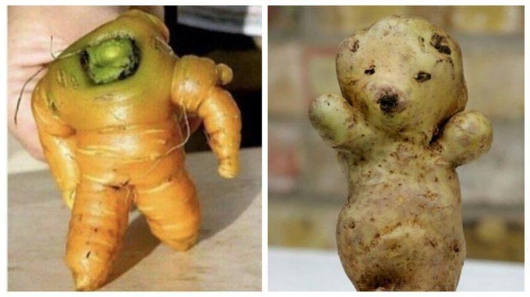 Смішні фотографії «ожилих» овочів і фруктів